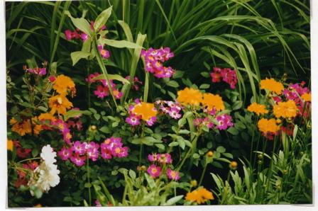 chi-garden-front-excerpt.jpg
